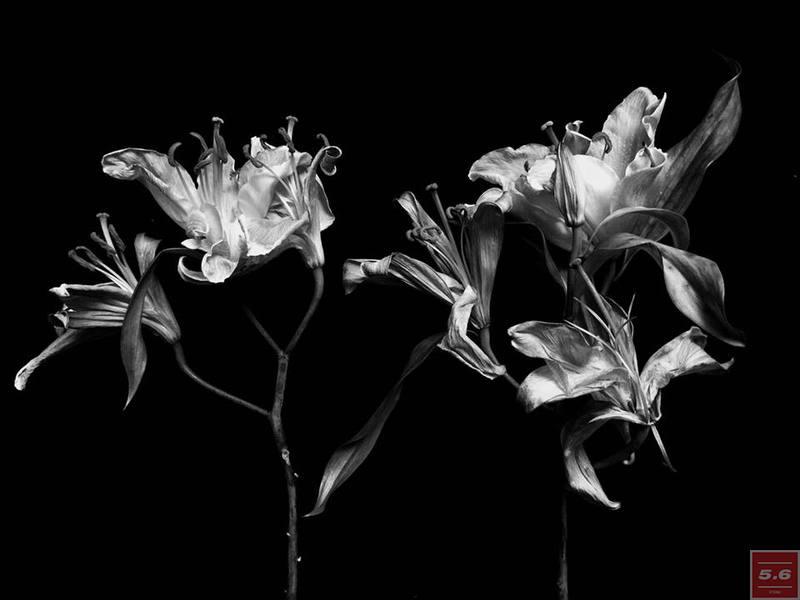 "Науменко Виктория, ""Lillium"", из серии ""Even Dying Still Beautiful"""
