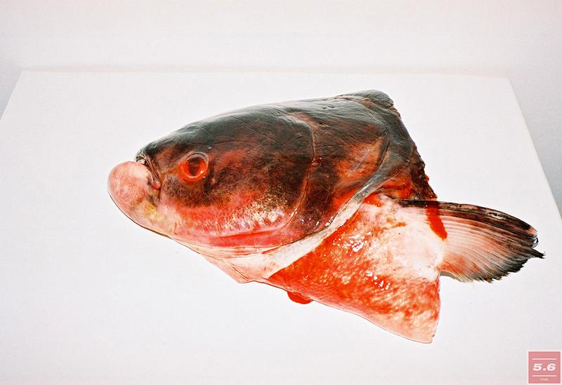 "GORSAD, ""Fish head"""