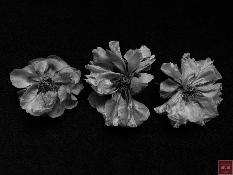 Науменко Виктория, Paeonia suffriticosa