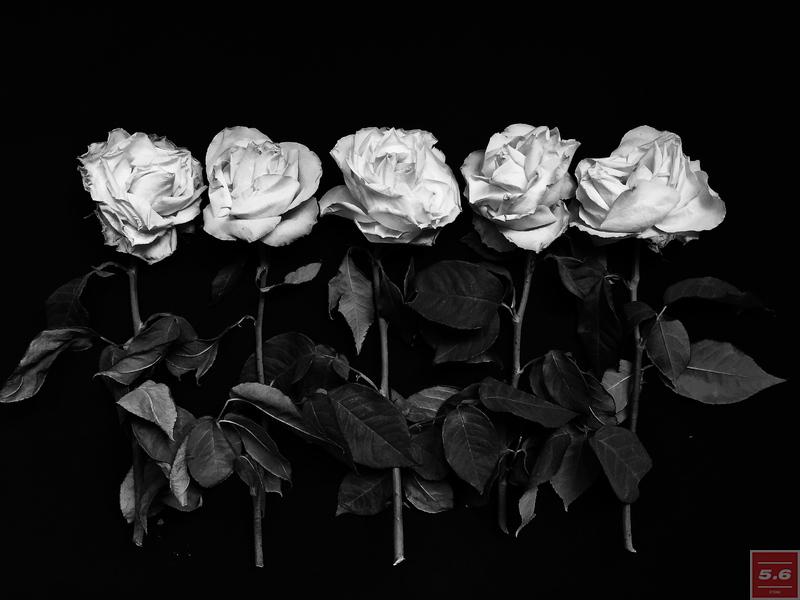 "Naumenko Viktoriya, ""Rosa"", from series ""Even Dying Still Beautiful"""
