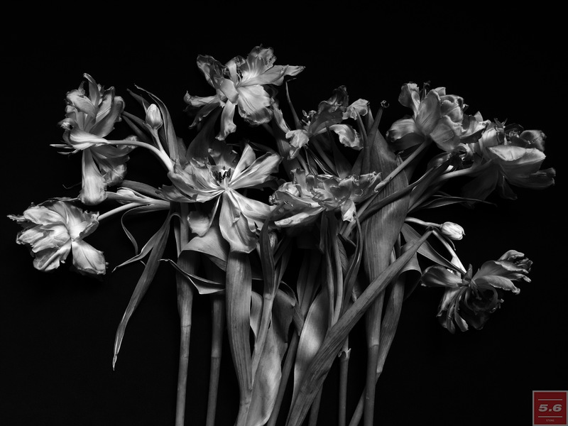 "Науменко Виктория, ""Tulipa II"", из серии ""Even Dying Still Beautiful"""