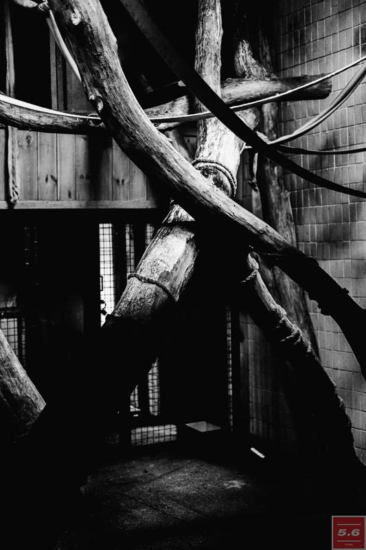 Константин Стрелец, Deep Zoo #1