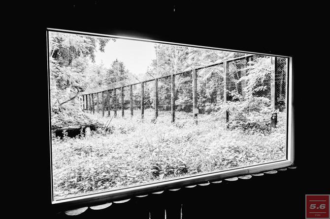 Константин Стрелец, Deep Zoo #2