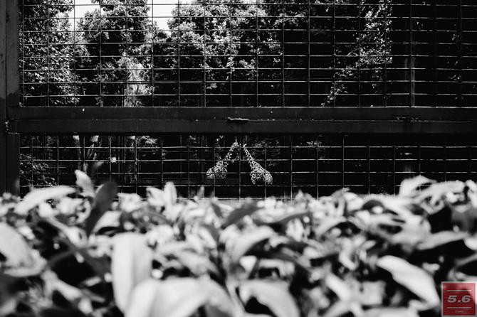 Константин Стрелец, Deep Zoo #3