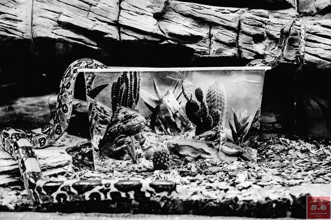 Константин Стрелец, Deep Zoo #4