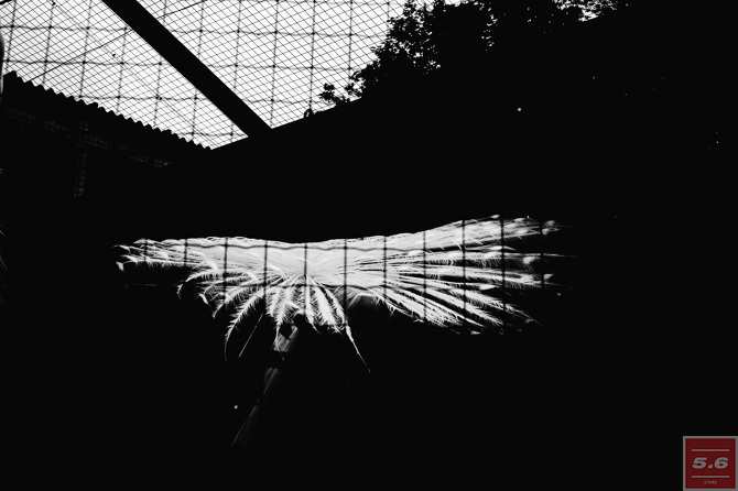 Константин Стрелец, Deep Zoo #7