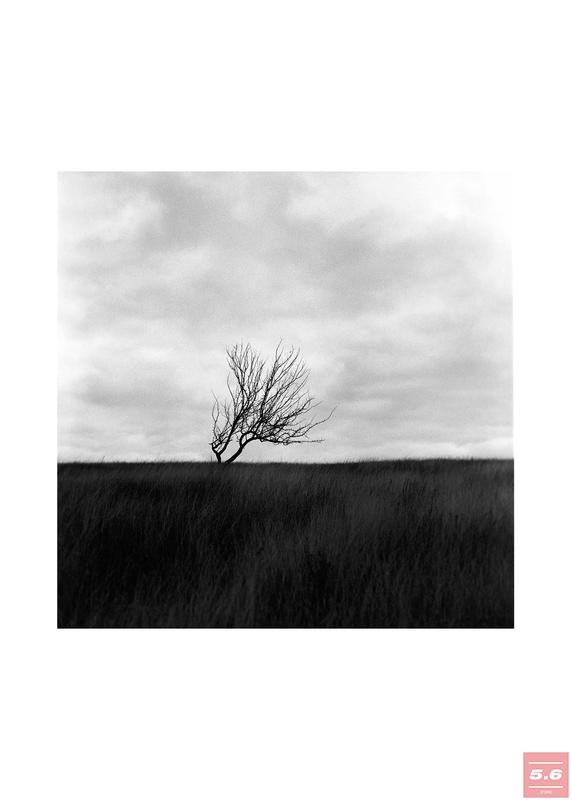 "Полякова Марина, ""A tree"""